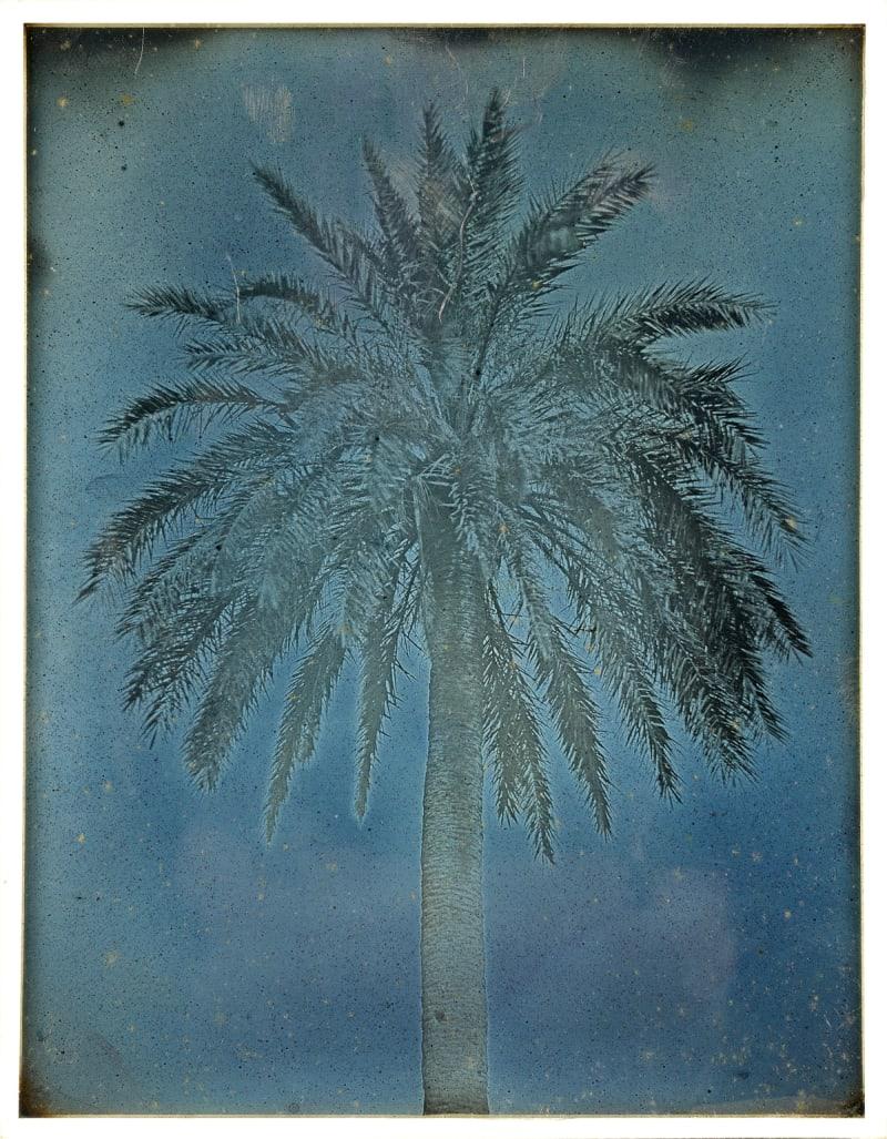 """Palm Tree near the Church of Saints Theodore, Athens"""
