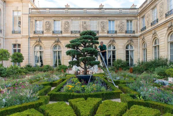 Hoch über Giscard d'Estaings Buchsparterre: Pierre Bon- naure, der Chefgärtner des Jardin de l'Élysée, bringt die Kiefernwolken an Sarkozys Riesenbonsai in Form.