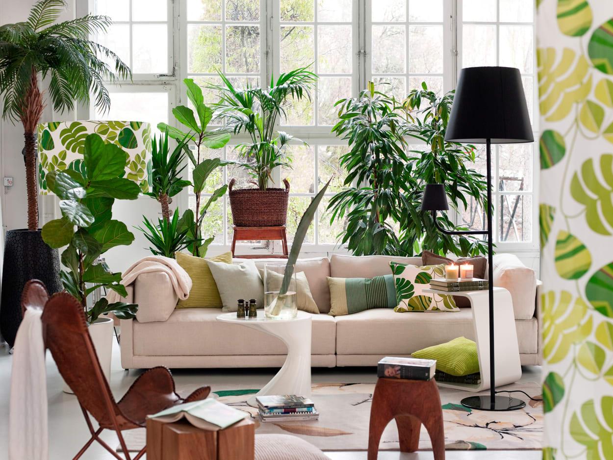 AD-USA-Pflanzen, Zimmerpflanzen, Bäume