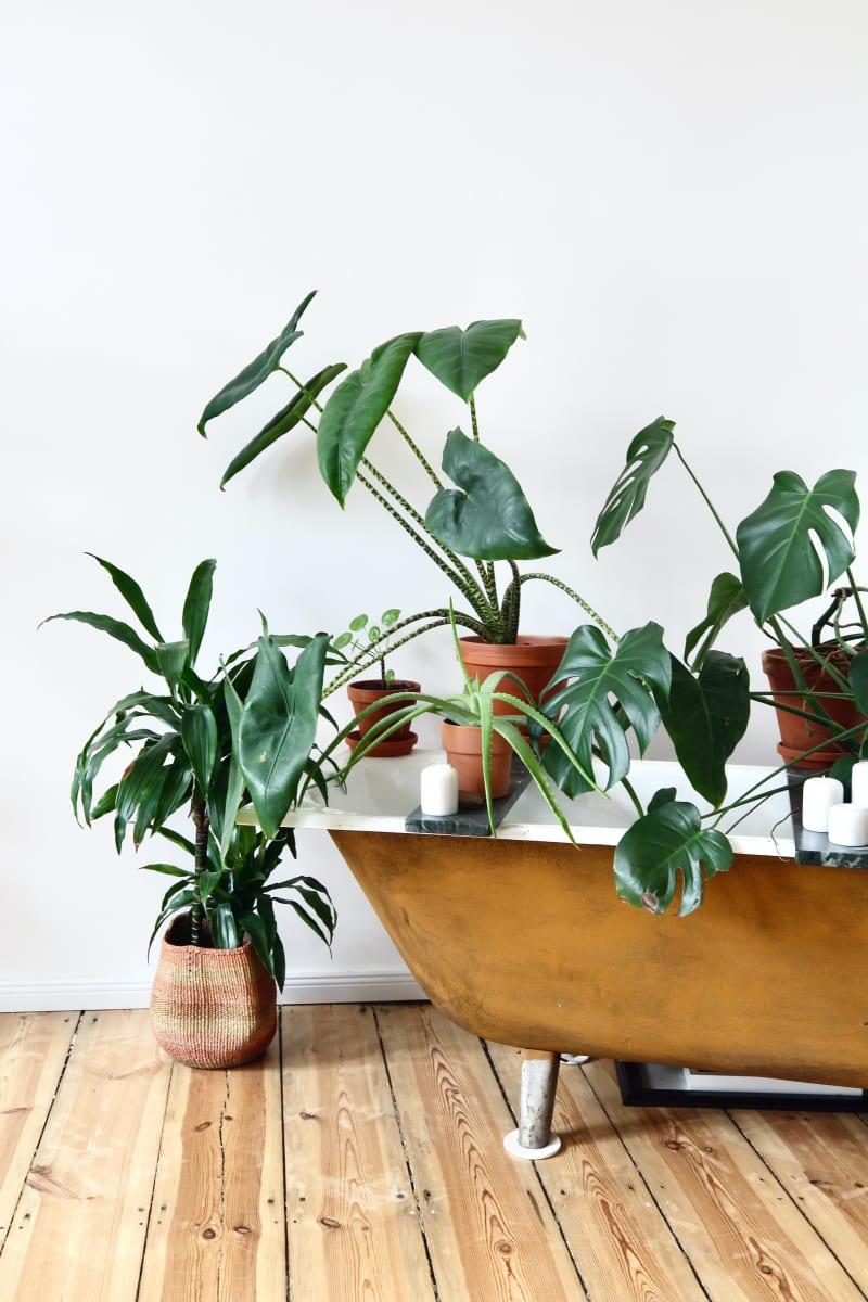 Zimmerpflanzen-Gestaltung im Raum