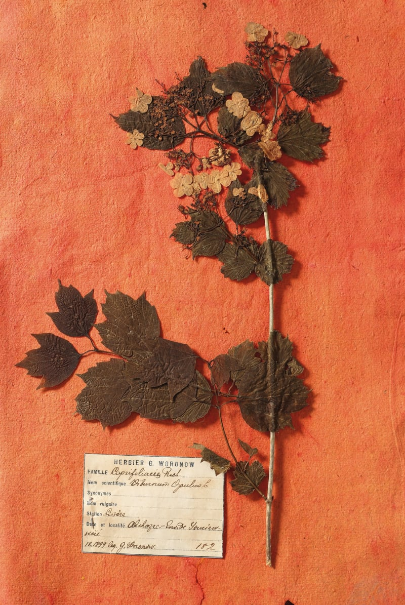 Kochbuch Herbarium