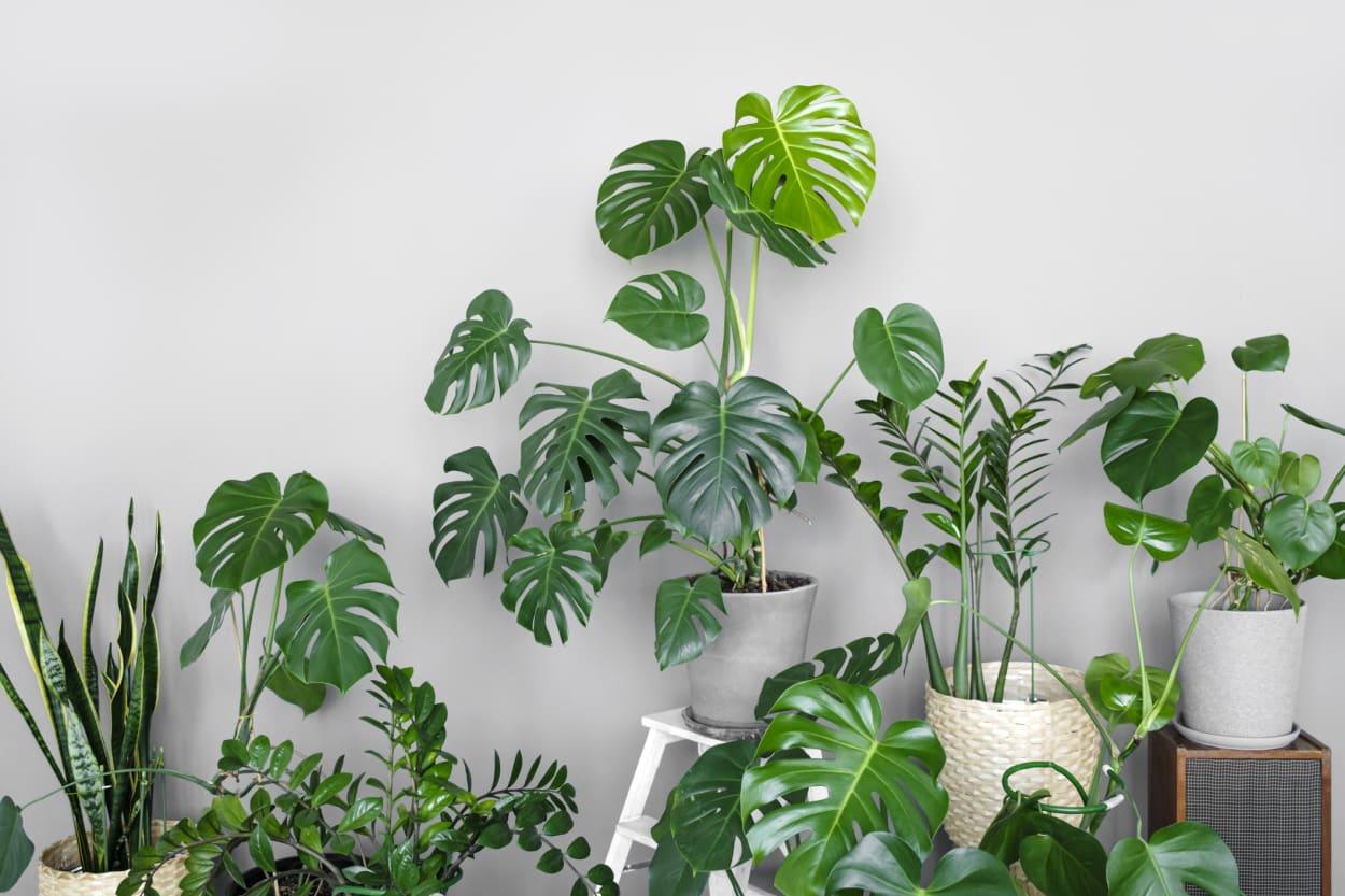 Viele grüne Zimmerpflanzen in verschiedenen Höhen aufgestellt
