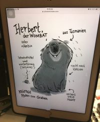 Wombat Herbert