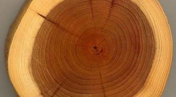 propriedades-madeira