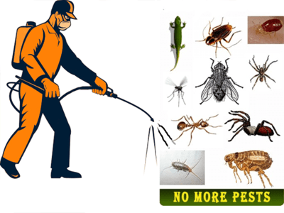Pest Control Services in Bangalore