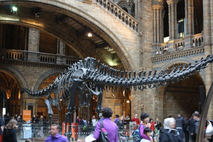 Dinosaur Hunt: Discovering the Natural History Museum