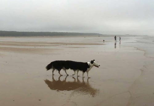 A distorted panoramic photo of a dog.