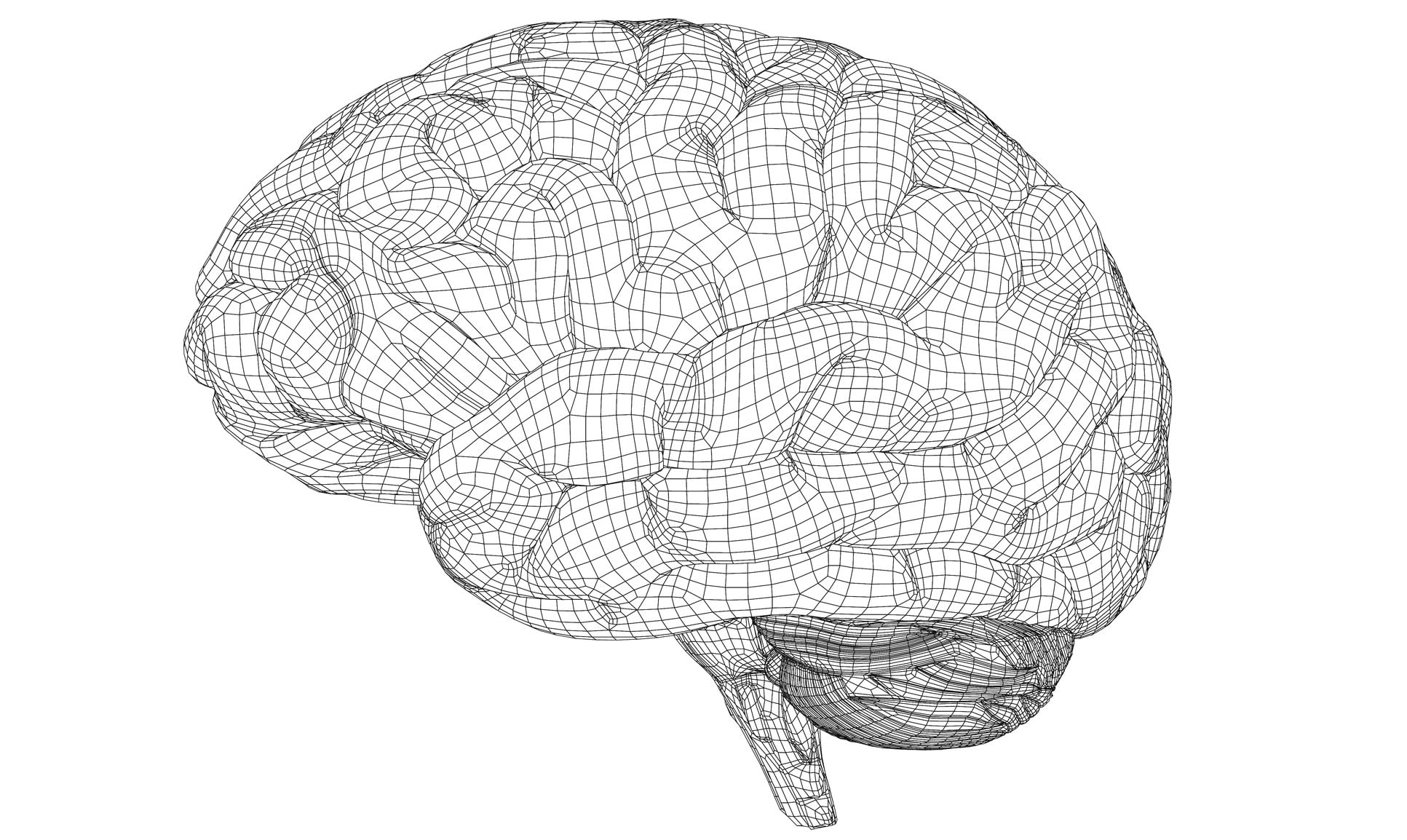 A polygonal wireframe of a brain
