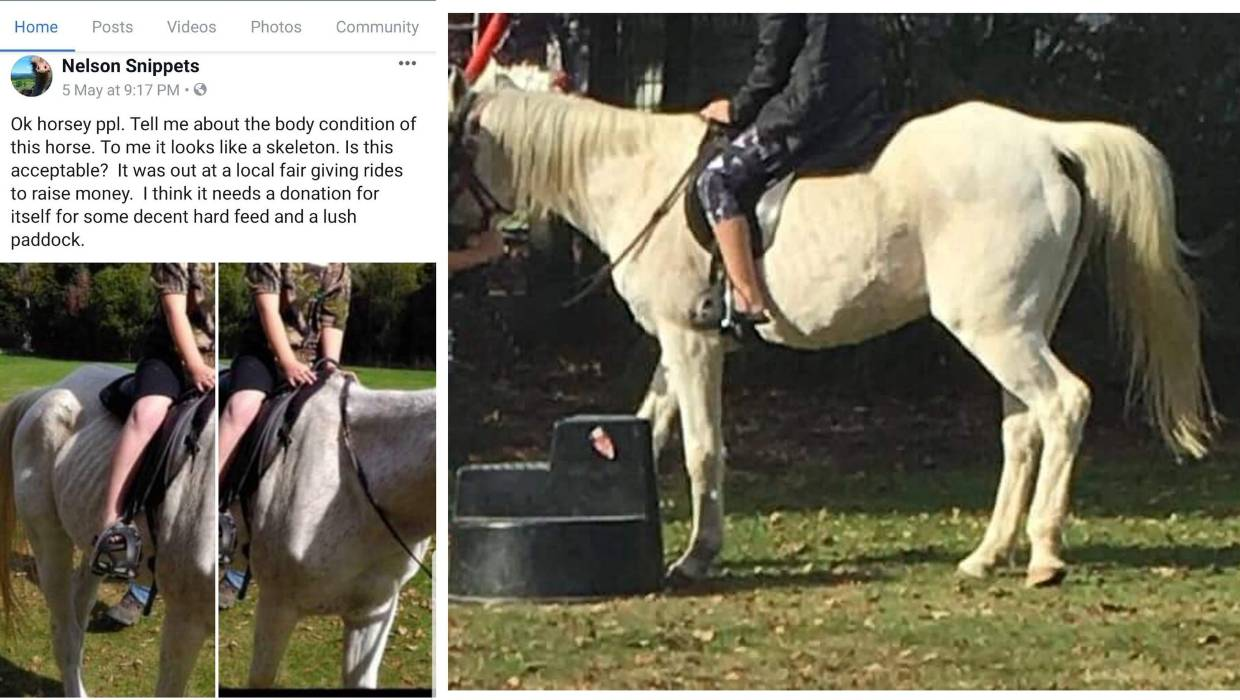 wild-oats-pony-club-shut-down-after-Facebook-abuse-photo-courtesy-Stuff-2