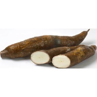 cassava rot köpa