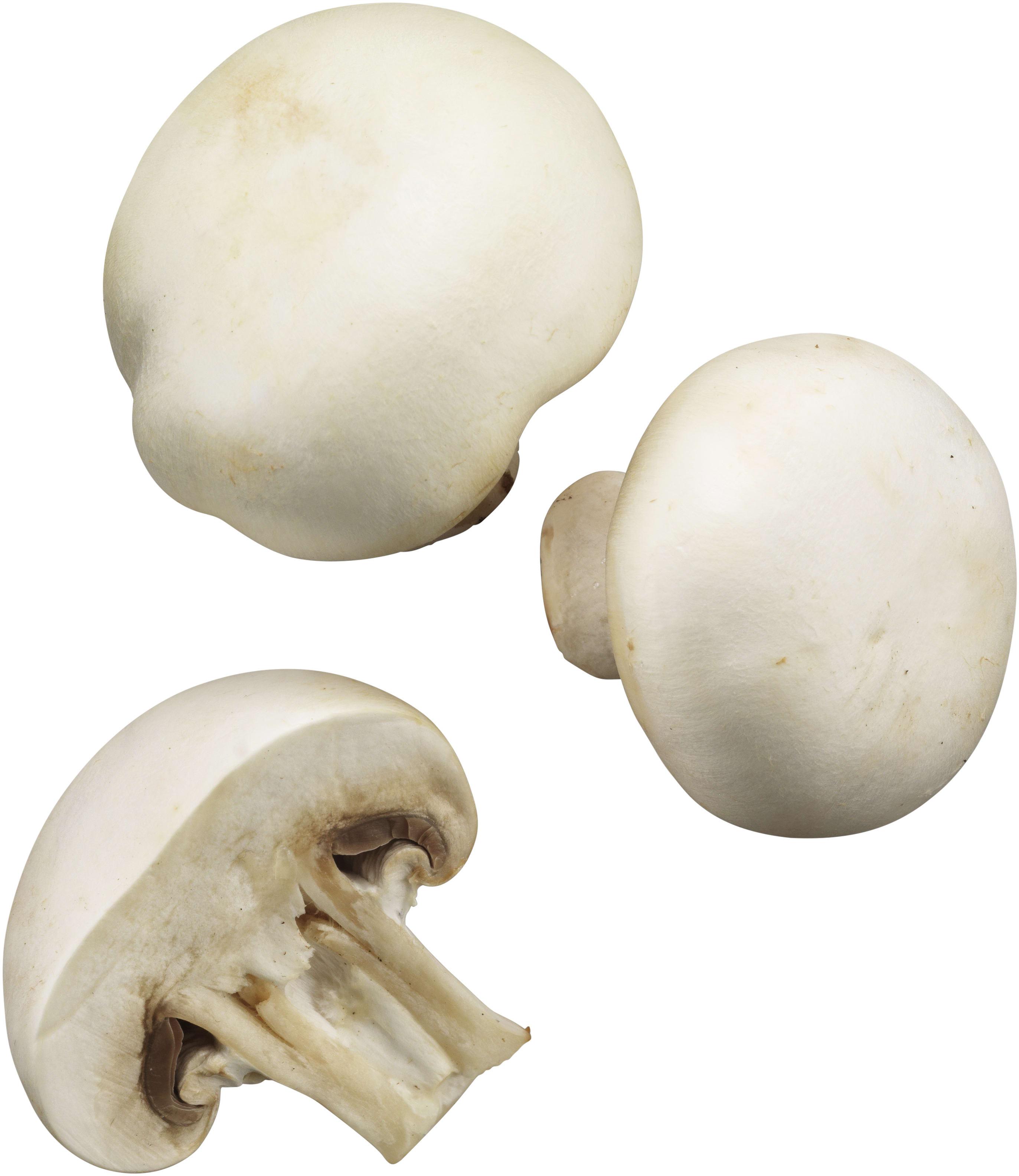 recipe: svampar i gräsmattan bilder [39]