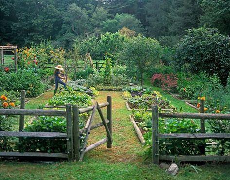 cottagecore garden1.jpg