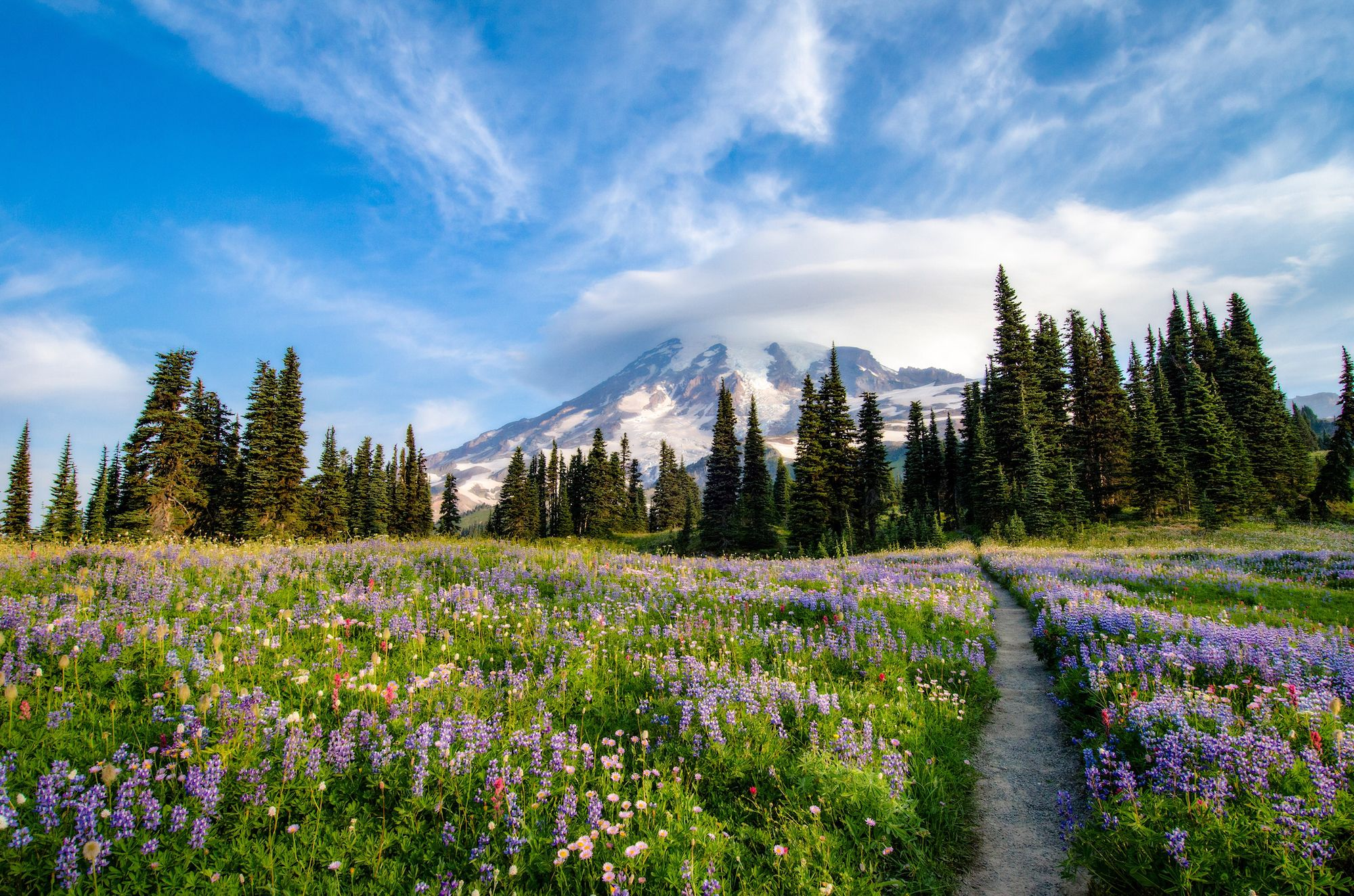 original_wildflower-bloom-washington-national-park-rainier.jpg
