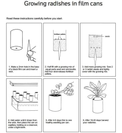 Growing radishes in film cans