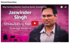 Why Farming Matters strawberry farming video