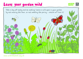 Wildlife activity sheets