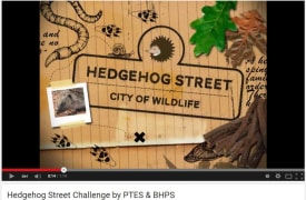 Hedgehog Street