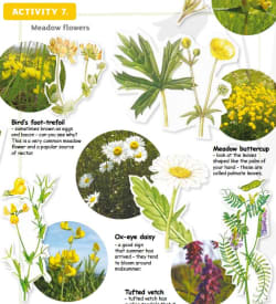 How healthy is your meadow?