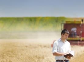 Wheat Growing Year