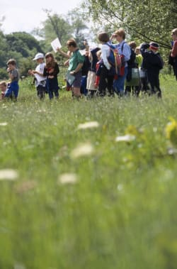 Reconnecting children with nature