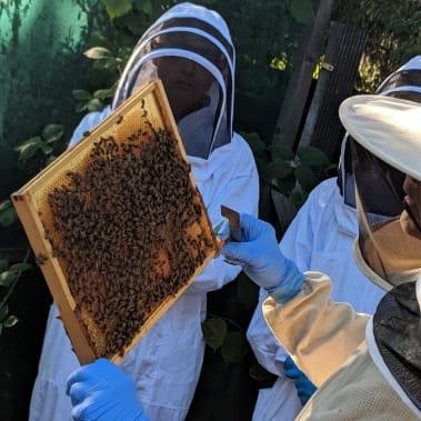 PROGRAMME: Honey bees in schools