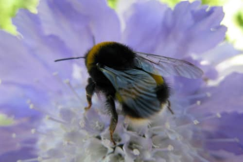 HOME EDUCATION HUB: Investigating bugs and bees