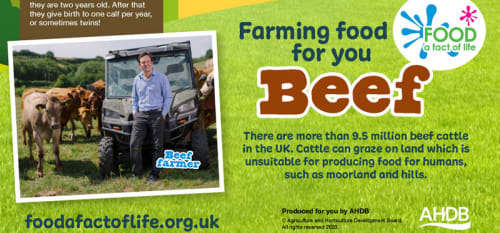 Farming Food For You posters