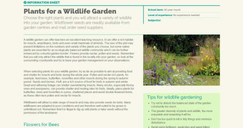 Plants for a wildlife garden