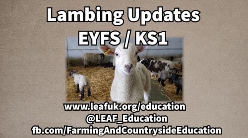 LEAF Lambing Updates 2021 (EYFS/KS1 Version)