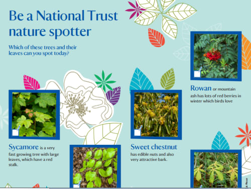 Nature spotter sheet - trees