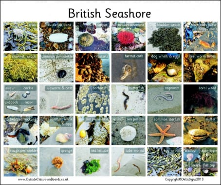 British Seashore - Photographic – 3117