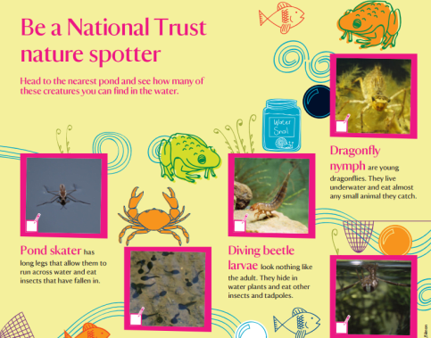 Nature spotter sheets - ponds