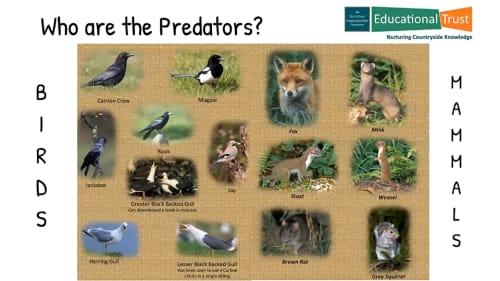 Conservation Fact File 5 - Predator & Pest Control