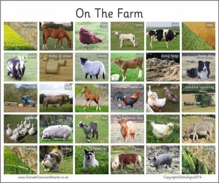 On The Farm - Photographic – 3119