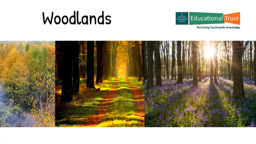 Conservation Fact Files 4 - Habitats - Woodlands