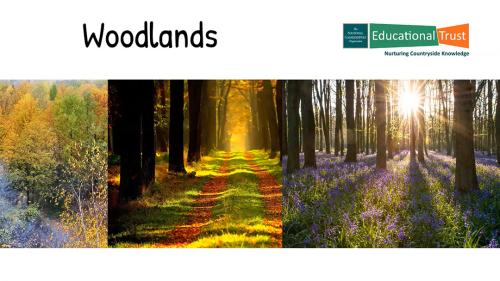 Conservation Fact Files 4 - Habitats - Woodlands