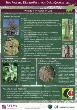 Tree Pests and Diseases - Teacher Factsheets