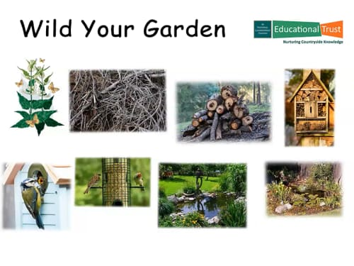 Conservation Fact File 7 - Wild Your Garden