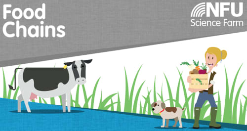 Farm Food Chains