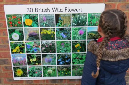 30 British Wildflowers- Photographic – 3118