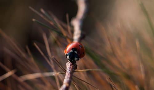 Ladybirds - Maths Activity