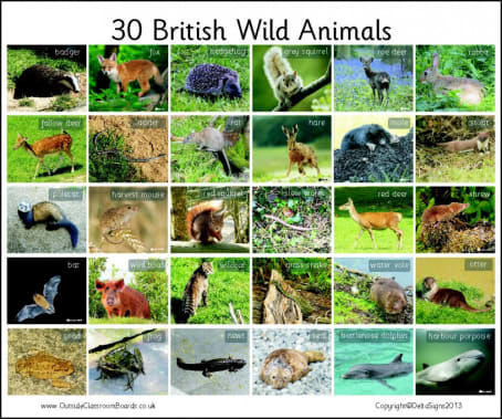30 British Wild Animals - Photographic – 3110