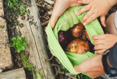 Global Climate Change - Food Waste