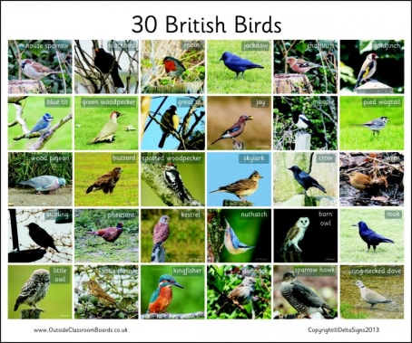 30 British Birds - Photographic – 3112