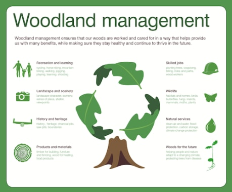 Woodland Management Poster