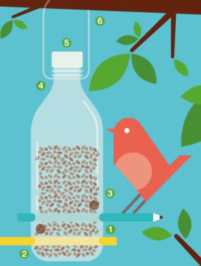 Build a Bottle Bird Feeder