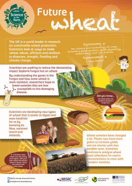 BBSRC Science on the Farm poster - WHEAT
