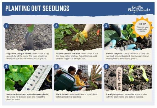 Gardening How To Guides