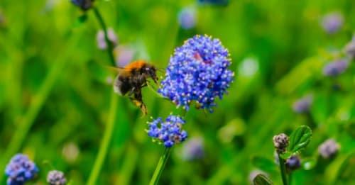 How Bee kind is your garden?