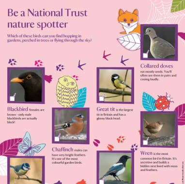 Nature spotter sheets - birds
